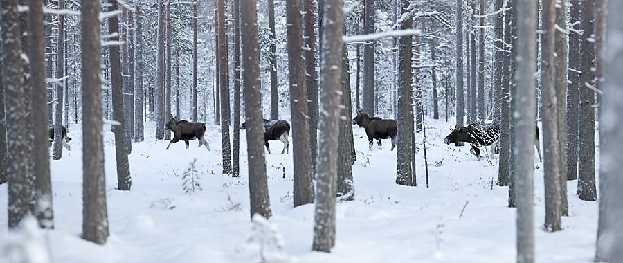 4lgar vintern